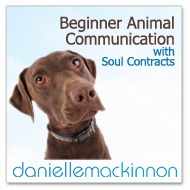 Beginner Animal Communication Online Class