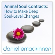 Animal Soul Contracts Mp3