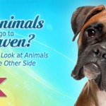 Webinar-dogsHeaven-replay