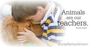 Animal are our teachers