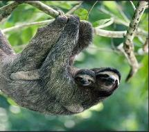 sloth_and_baby-215x190