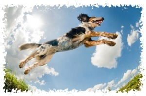 Dog flying through the air