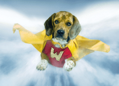 hurricansandysuperdog