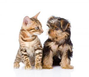 cats and dogs don't like each other