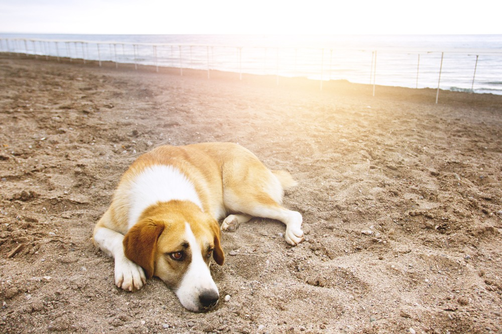 Dog grief, it is time to euthanize my dog quiz