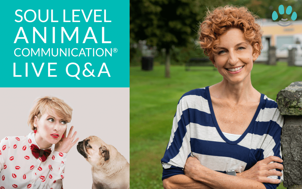 Soul Level Animal Communication® Live Q and A