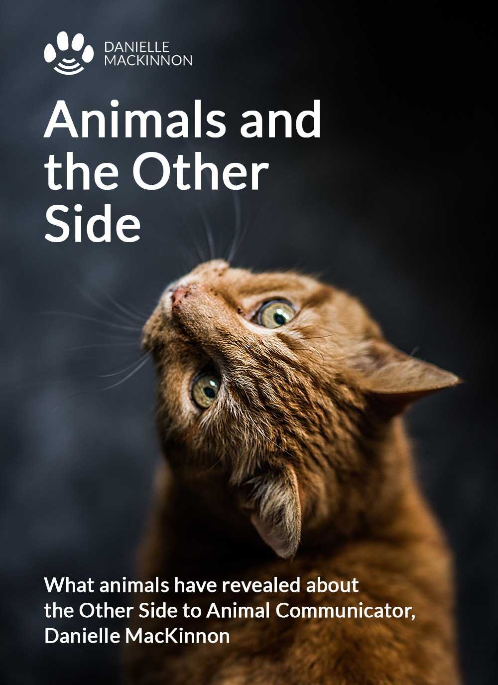 animals and the other side book