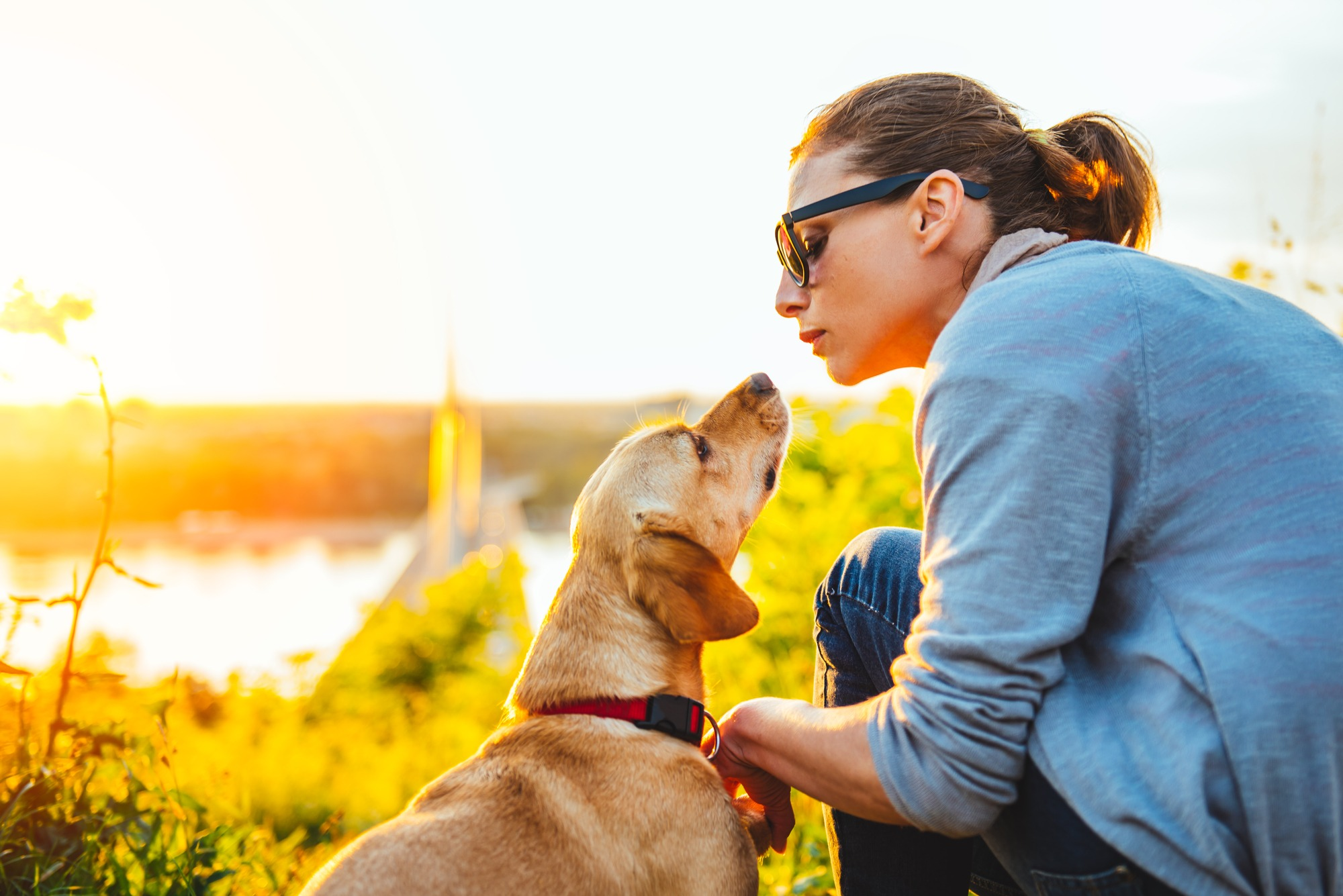 hire an animal communicator