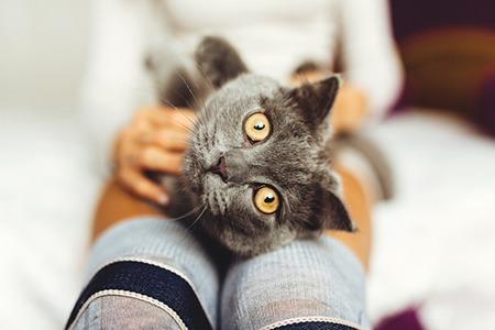 learn animal communication