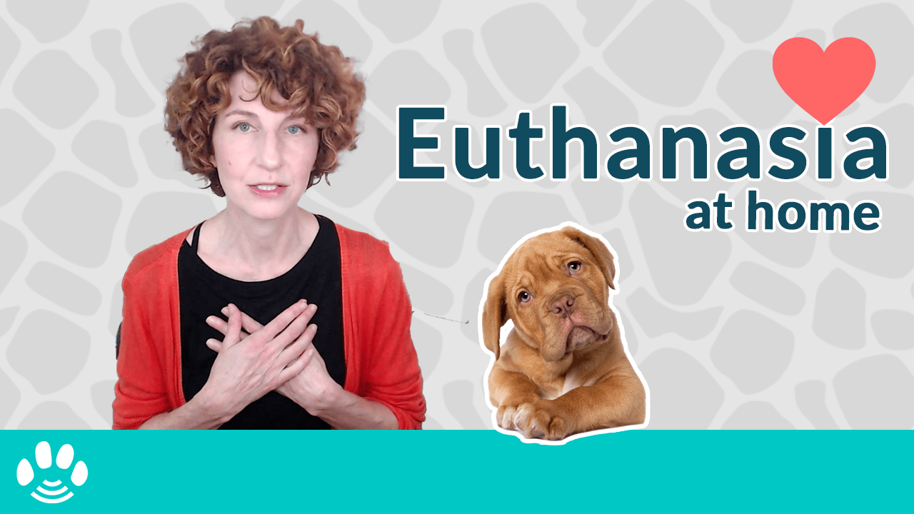 Pet Euthanasia at Home