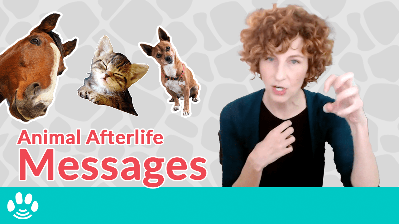 Pets in the Afterlife
